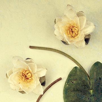 hsa-360x360-blomma-1