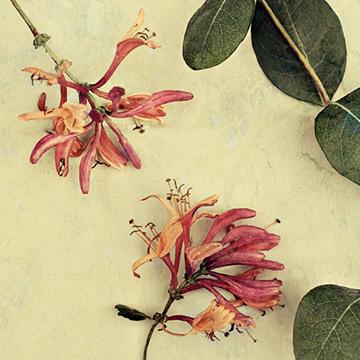 hsa-360x360-blomma-2